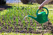 Woman using a plastic watering can.