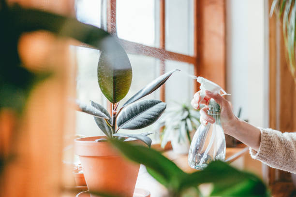 woman watering houseplants - watering stock pictures, royalty-free photos & images