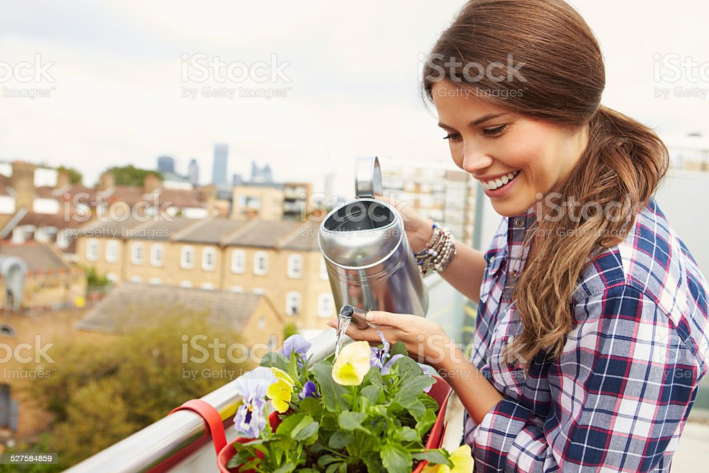 Woman Watering Plant In Container On Rooftop Garden stock photo