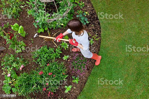 Woman weeding a flower bed with a hoe picture id157647881?b=1&k=6&m=157647881&s=612x612&h=t84 gjucczwg0x3a8t54kvgp5ibkmchjbai8w63nq2o=
