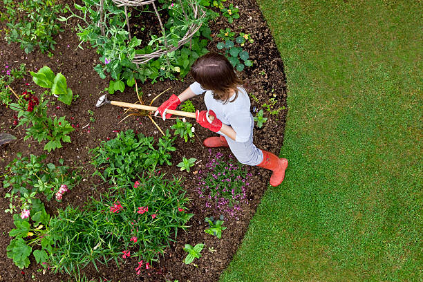 Woman weeding a flower bed with a hoe Overhead bird's eye view of woman weeding a garden flower bed with a hoe. Sweet peas and french beans are growing up a wigwam, with newly planted roses, nasturtium, canna, dahlia etc. garden hoe stock pictures, royalty-free photos & images