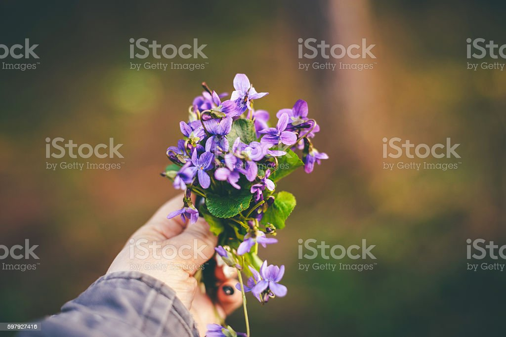 Woman with a bouquet of field flowers stock photo