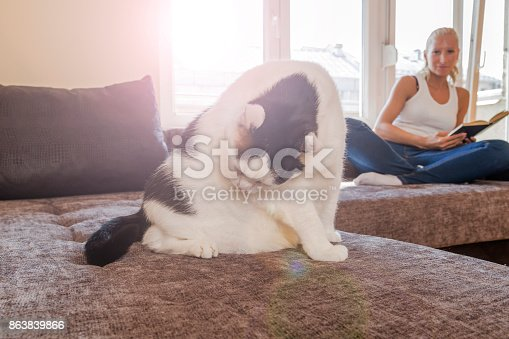 istock woman with a cat by the window reading a book / woman reading a book 863839866