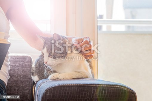 istock woman with a cat by the window reading a book / woman reading a book 863843228