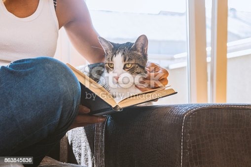 istock woman with a cat by the window reading a book / woman reading a book 863845636