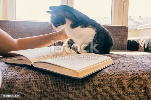istock woman with a cat by the window reading a book / woman reading a book 863846062