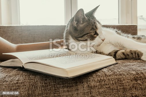 istock woman with a cat by the window reading a book / woman reading a book 863846168