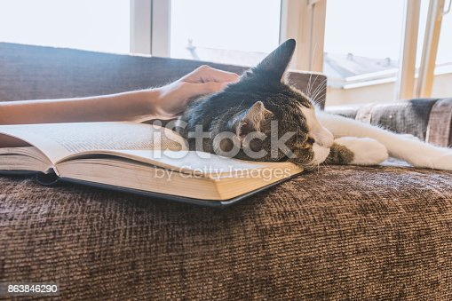 istock woman with a cat by the window reading a book / woman reading a book 863846290