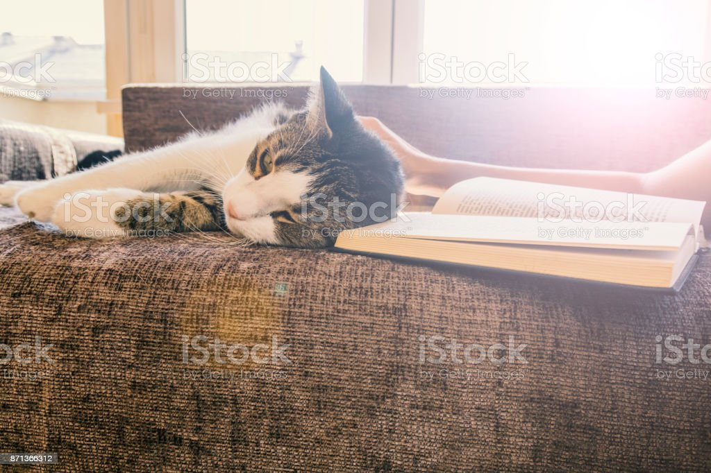 young woman reads her favorite book with her cat in the apartment