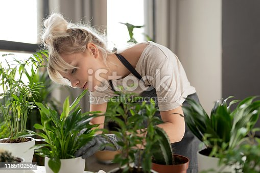 Pretty woman grows tropical plants in her garden. Gardener in working outfit looking after different exotic flower and herb.