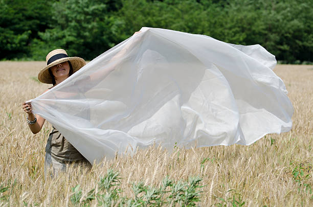 Woman with a white sheet stock photo