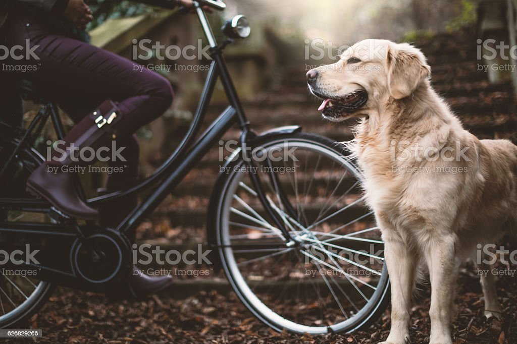 Woman with bike and dog outdoors stock photo