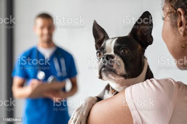 Woman with boston terrier dog at vet picture id1158244843?b=1&k=6&m=1158244843&s=612x612&h=dl1dseurzgzvfmyssalokpgjqjkr2ow8d77uyfn72ek=