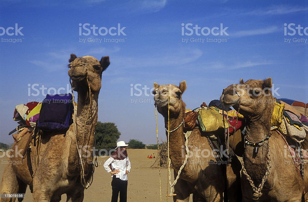 Woman with camels stock photo