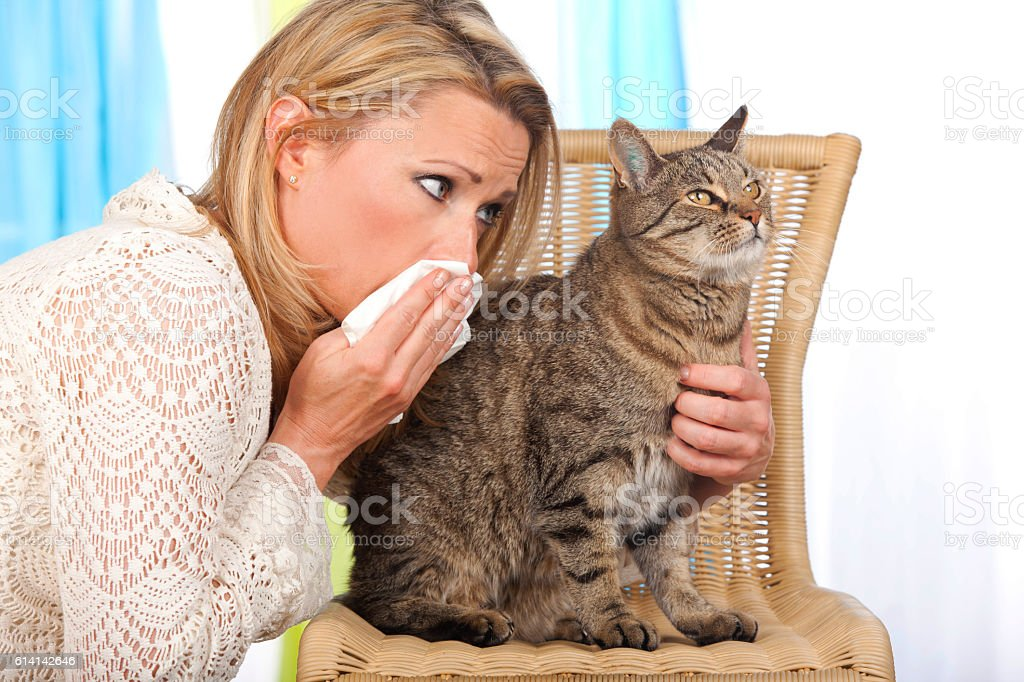 Woman with cat and handkerchief stock photo