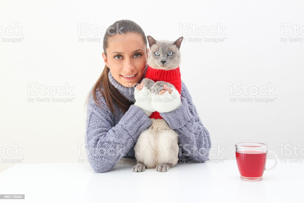 A woman with cup of red tea wears a purple sweater and white gloves with a Siamese cat wearing a red sweater 免版稅 stock photo