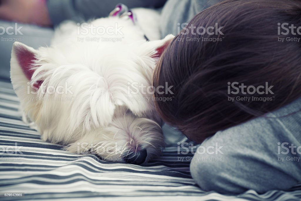 Image result for westie hug