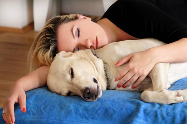 Mulher com bonitos cães em casa. Menina bonita, descansar e dormir com seu cachorro na cama no quarto. Proprietário e cachorro dormindo no sofá. Retriever de labrador amarelo relaxar. Retrato da mulher e sua melhor amiga. - foto de acervo