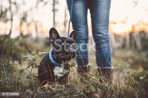 istock Woman with dog close up outdoors 813703830