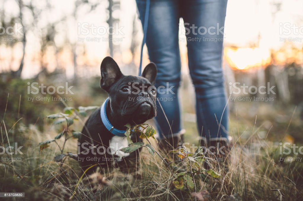 Woman with dog close up outdoors stock photo