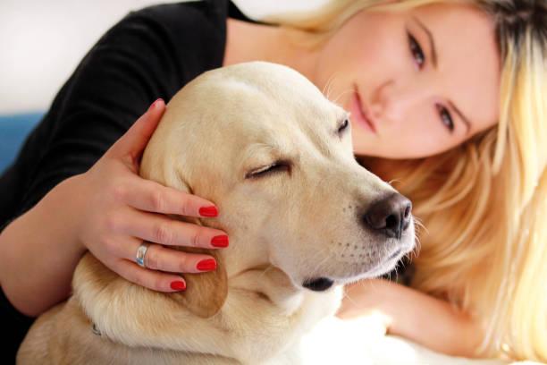Mulher com cão está descansando na cama, em casa, relaxar no quarto. Menina é acariciando com seu cachorro. Retrato do retriever de labrador amarelo bonito e seu proprietário, apreciando na cama azul, posando na frente da câmera. - foto de acervo