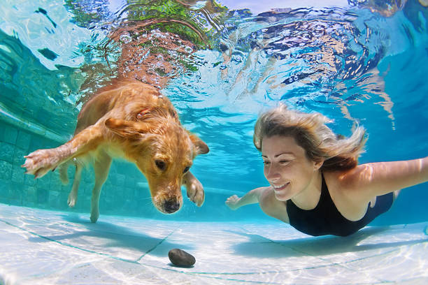 Woman with dog swimming underwater picture id508713832?b=1&k=6&m=508713832&s=612x612&w=0&h=bl25ax7ghvbxogxprz7v1w jobq5h pbs9pyco5mkva=