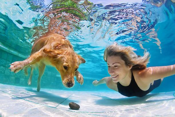 Femme avec chien nager sous l'eau - Photo