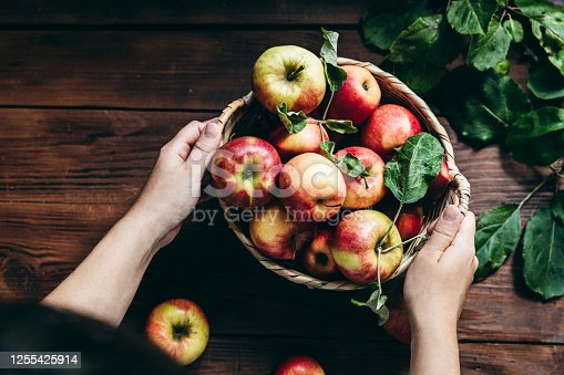Directly above shot of woman with a basket full of harvested apples on table. Woman with freshly picked apples.