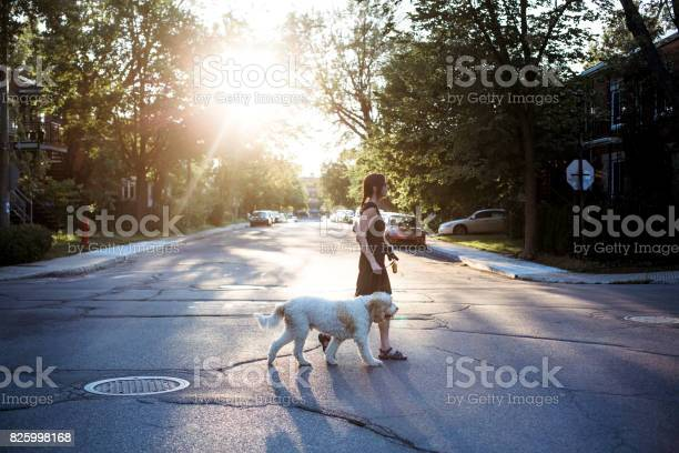 Woman with goden doodle dog walking in the street picture id825998168?b=1&k=6&m=825998168&s=612x612&h=nbedb0nhix0pg rtxv4tnodsaewqu7pzighlc6rv9us=