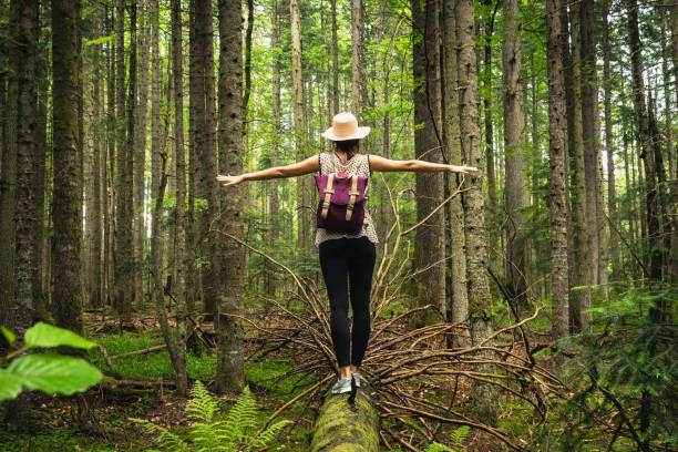 Woman with hat and backpack balancing on broken tree in ancient pine rainforest. stock photo