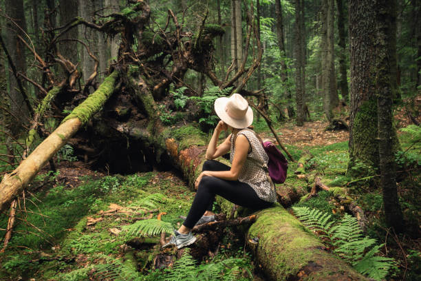 Woman with hat and backpack sitting on broken tree in ancient pine rainforest. stock photo