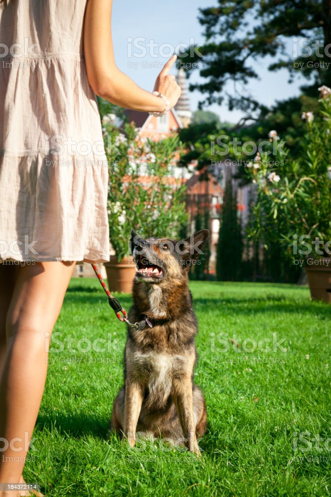 woman with her dog in the park royalty-free stock photo