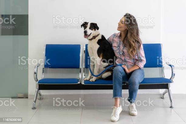 Woman with her dog in the waiting room at the vet picture id1162639293?b=1&k=6&m=1162639293&s=612x612&h=c0lpobsdqichhysqo01yv4wyze skg6e5buhf0rby a=