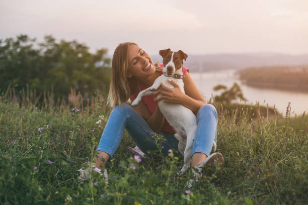 woman with her dog jack russell terrier - pet owner stock pictures, royalty-free photos & images