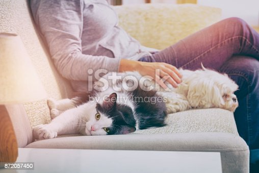 istock Woman with her pets 872057450