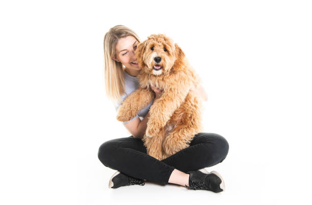 woman with his Golden Labradoodle dog isolated on white background stock photo