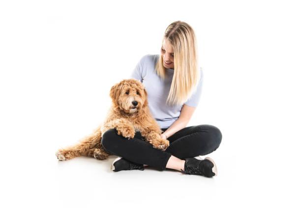 kvinna med sin golden labradoodle hund isolerad på vit bakgrund - animal doodle bildbanksfoton och bilder