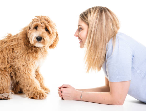 Woman with his golden labradoodle dog isolated on white background picture id1147997539?b=1&k=6&m=1147997539&s=612x612&w=0&h=3yjcrs nfcnxbacxy9rcck5ml01ippqb4u9rsot6z0o=