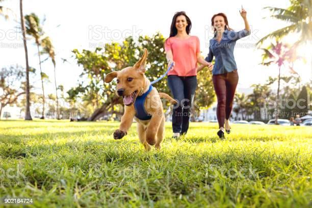 Woman with his labrador puppy during a beautiful day at the park in picture id902164724?b=1&k=6&m=902164724&s=612x612&h=6tsdbdiwbu bttwet0 e41qhlfcvcr8zhenfzpeblrq=