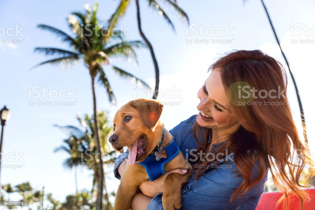 Woman with his Labrador puppy during a beautiful day at the park in Miami Beach. stock photo