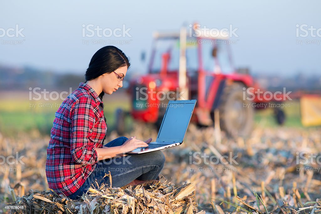 Woman with laptop in corn field stock photo