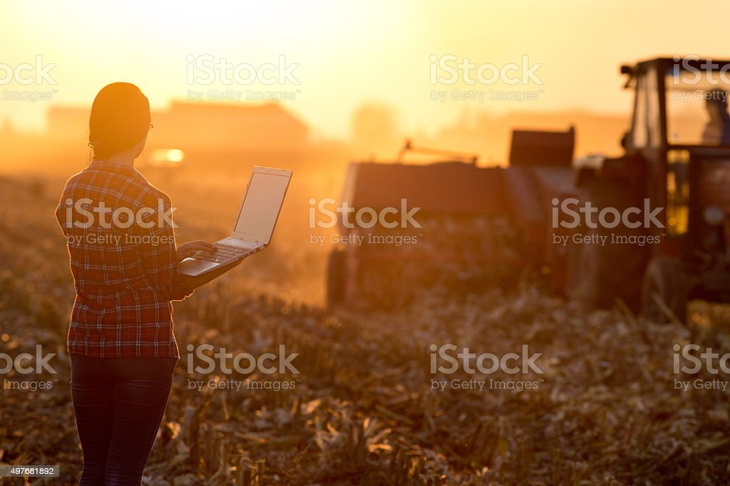 Woman with laptop in the field royalty-free stock photo