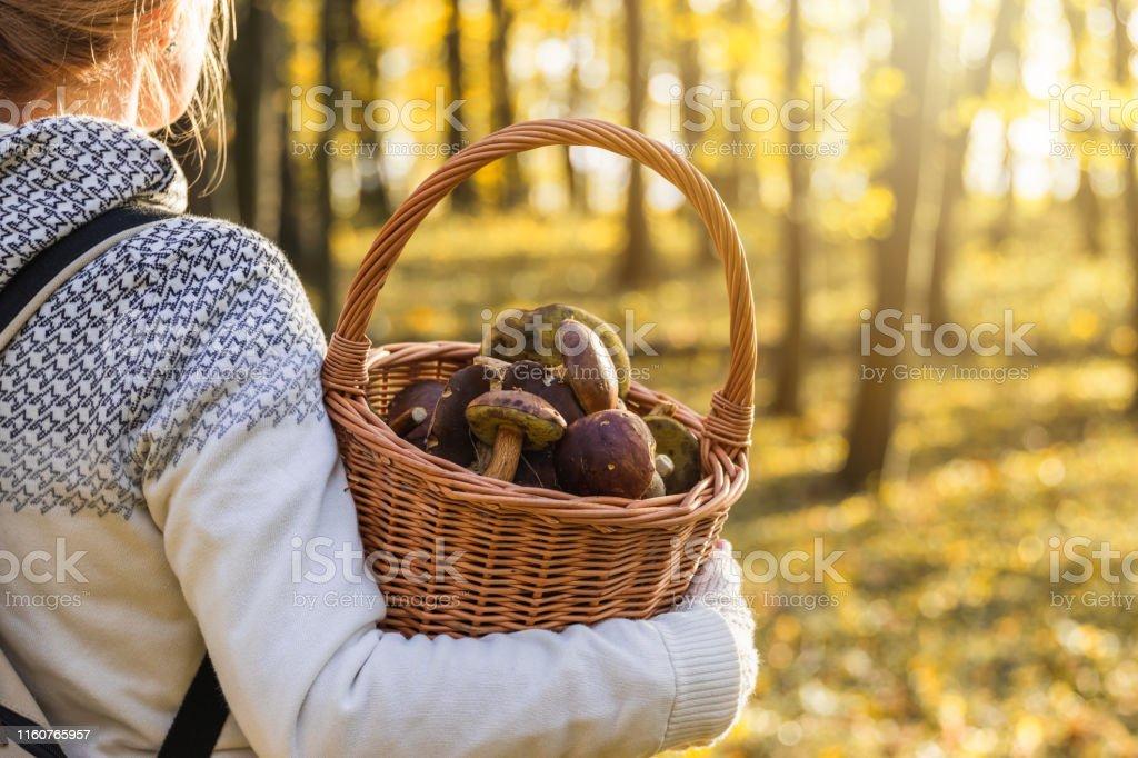 Vrouw met champignons in rieten mand in herfst bos. - Royalty-free Actieve levenswijze Stockfoto