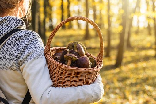 Vrouw Met Champignons In Rieten Mand In Herfst Bos Stockfoto en meer beelden van Actieve levenswijze