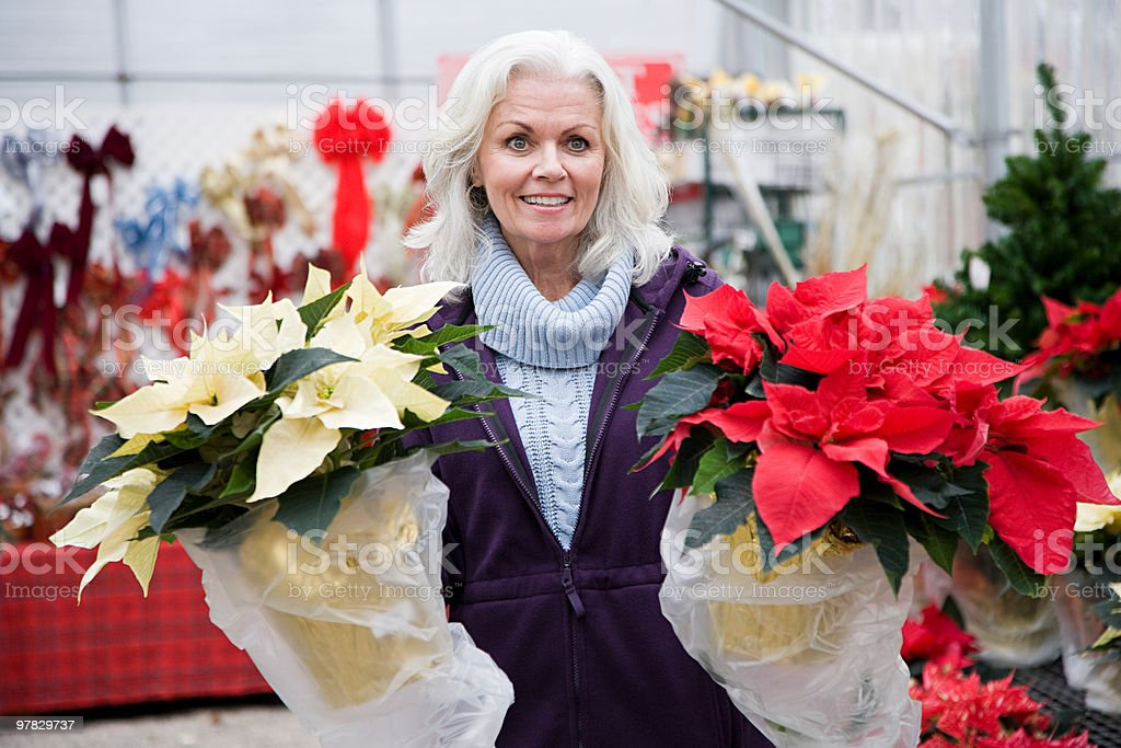 Woman with poinsettias royalty-free stock photo