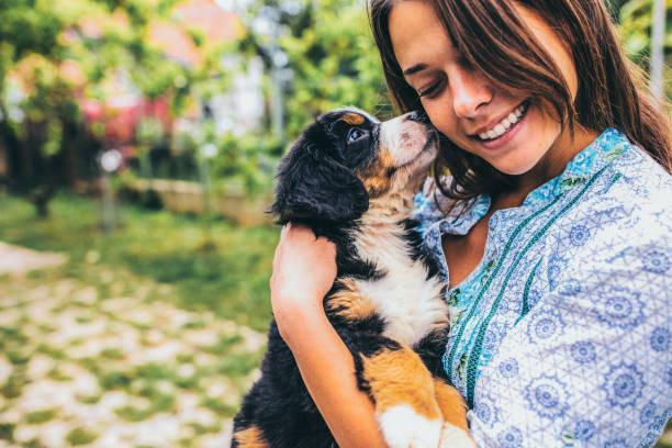 frau mit welpen - hunde aus dem tierheim stock-fotos und bilder