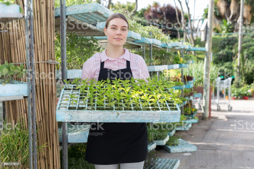 Woman with seedlings crate - Royalty-free Activity Stock Photo