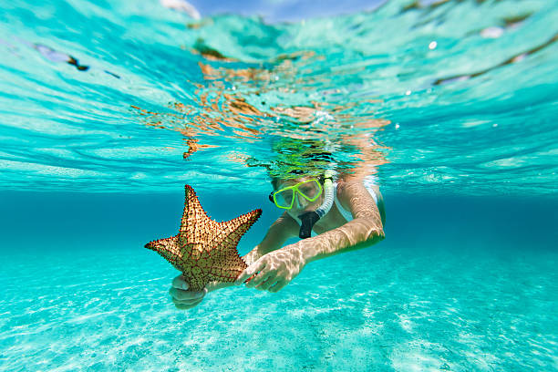 woman with snorkel and mask holding a starfish young woman in white swimsuit with snorkel and mask snorkeling with an alive starfish in the Caribbean waters underwater diving stock pictures, royalty-free photos & images