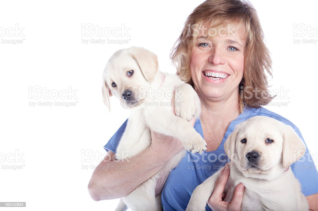 Woman with Two Lab Puppies -- Veterinarian stock photo