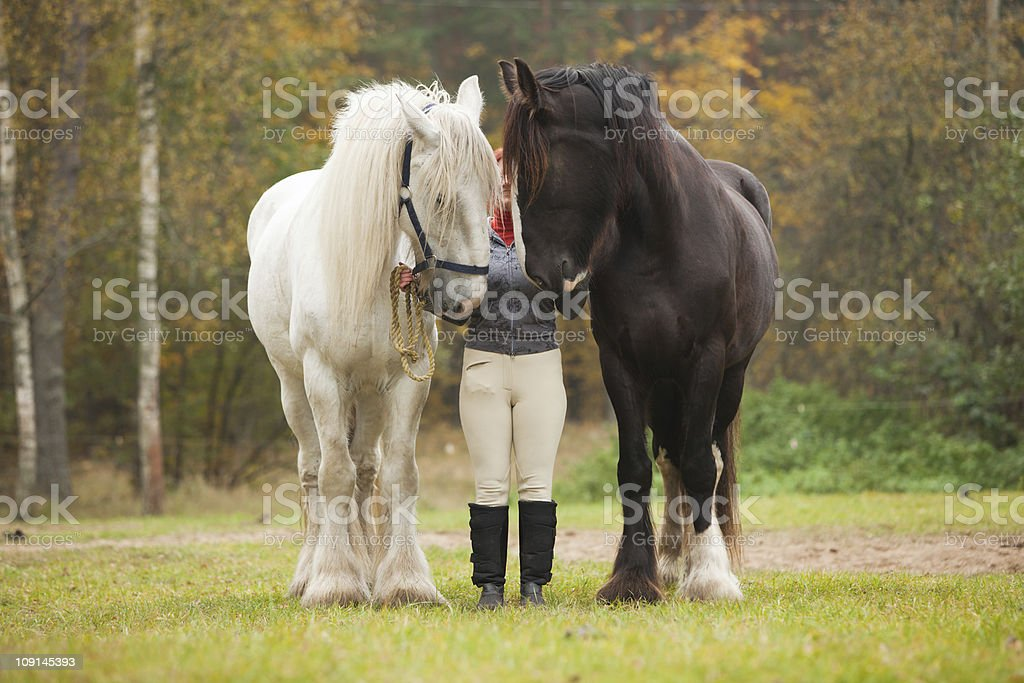 Woman with two shire horses stock photo